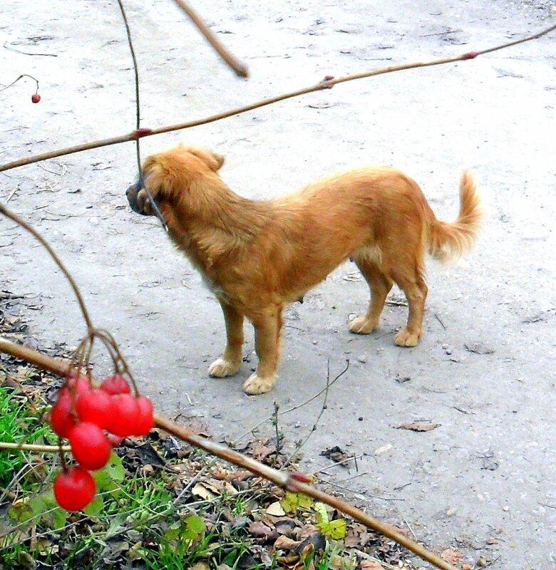 Из жизни собачьей