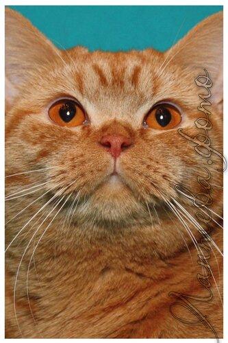Лаптева-фото - Фотографии животных для питомников и заводчиков 0_e1c3c_ce8ac6fb_L