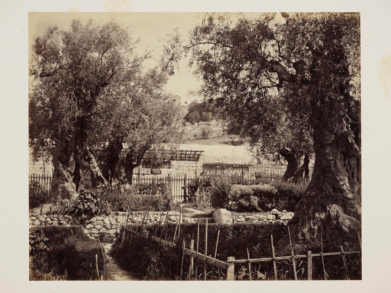 2 апреля 1862. Гефсиманский сад. Иерусалим