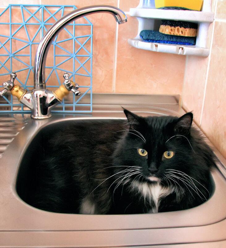 Хозяева..... когда воду включите?:)))