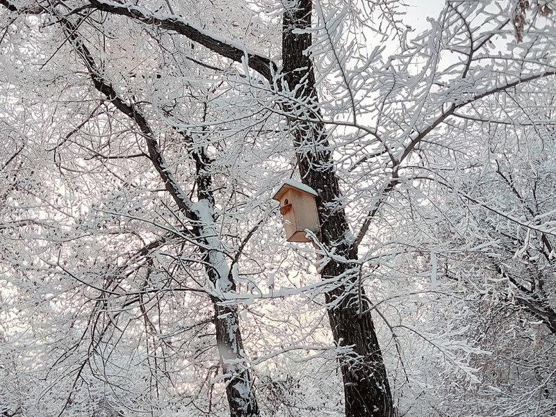 снег1 (4).jpg
