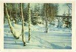 Открытка Зимний лес поздравление