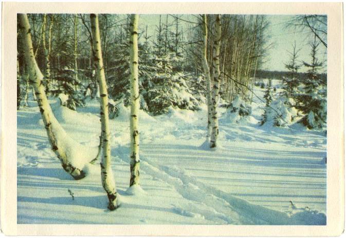 Зимний лес. С Новым годом!