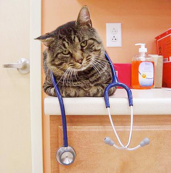 У кошки гноятся глаза Кот доктор фото