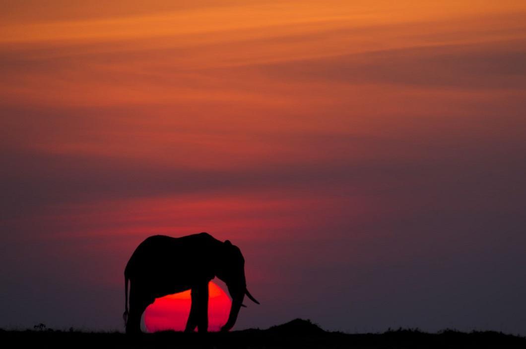 10. Слон на закате. (Фото: Пол Гольдштейн / Rex)