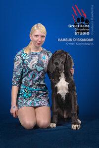 Hamsun d'Iskandar — #33, baby class, black.Owner Korenskaya A.