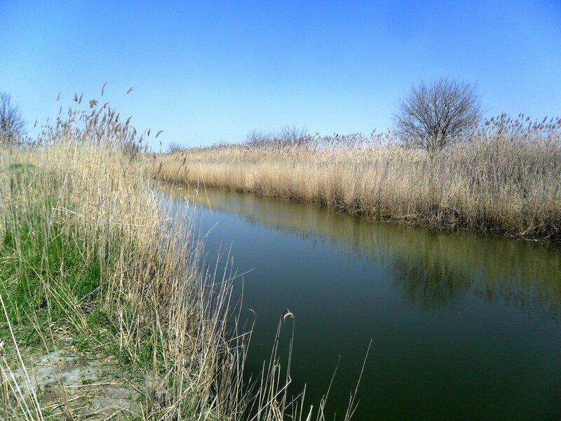 У весенней воды ... SAM_6189.JPG