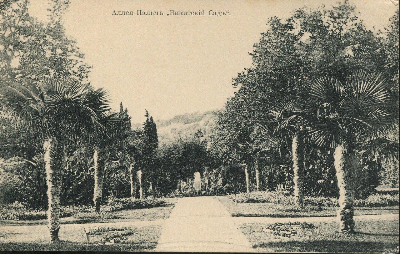 Аллея пальм. «Никитский сад»