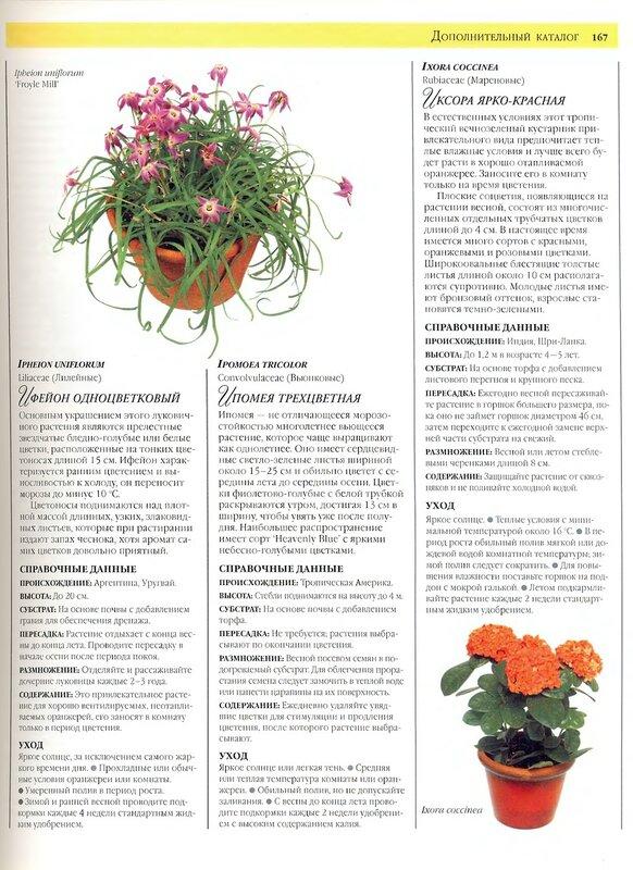 Энциклопедия комнатных цветов и их уход с