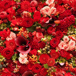roses (1).jpg