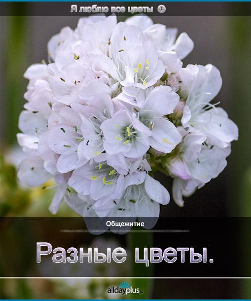 Я люблю все цветы, часть 48.