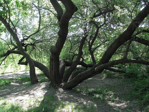 И такие бывают деревья