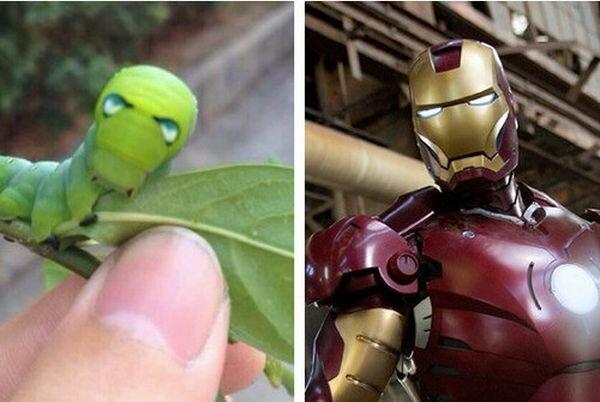 Кажется, найдена домашняя гусеница Тони Старка