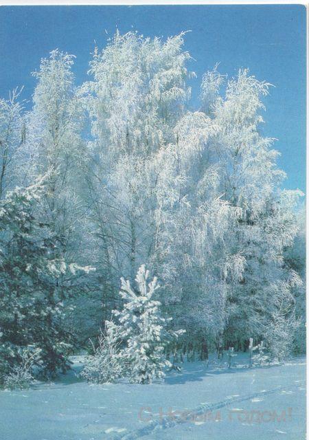 Лес в белом инее. С Новым годом!