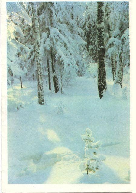 Лес снегом окутан. С Новым годом!