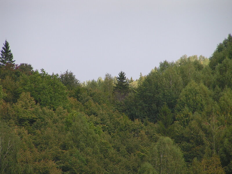Буйство дикого леса (04.07.2013)
