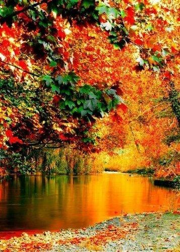Живые картинки на тему осень золотая
