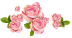 roses forus_element(42).png