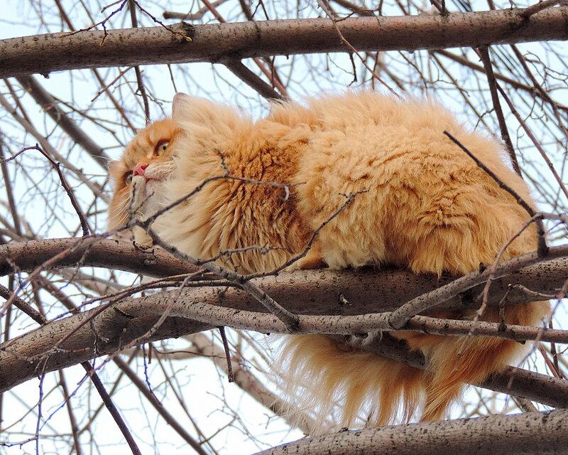 Солнышко словно Кошка