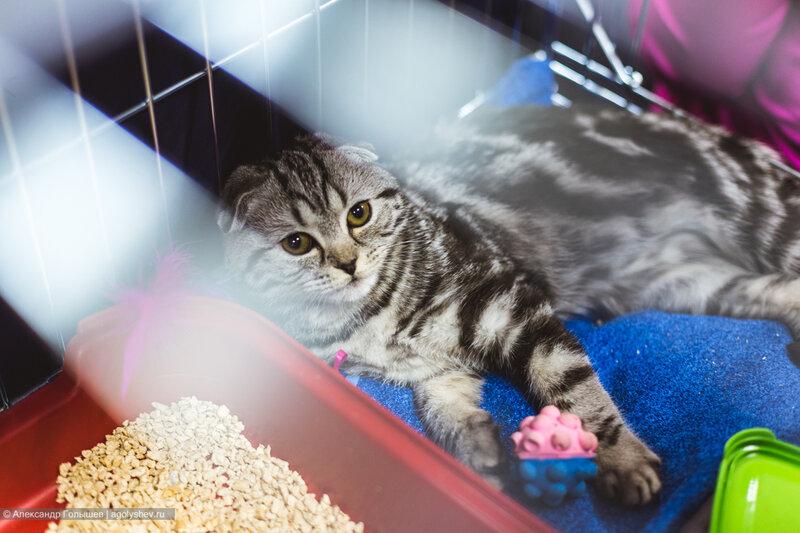 """Международной выставке кошек """"Magic 8"""" (""""Магическая восьмерка"""")"""