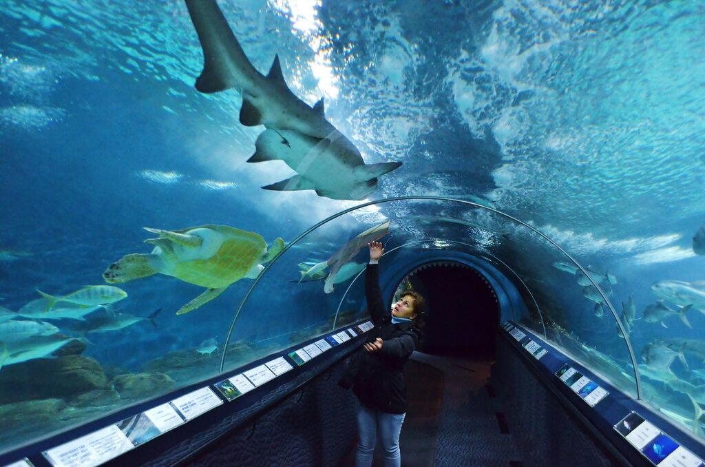 Фото 7. Отдых в Китае. Что посмотреть в Шанхае за один день. Самое впечатляющее место в шанхайском океанариуме - аквариум с белыми акулами и гигантскими черепахами (Длительность экспозиции = 1/30 сек, f/3.5, ФР=18 мм, ISO 3200)