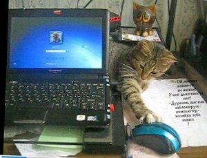Кошки-мышки.jpg
