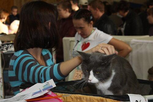 """Международная выставка кошек """"Удивительные кошки"""", 5-6 октября 2013, г. Сургут, ХМАО 0_ddb24_64b9926b_L"""