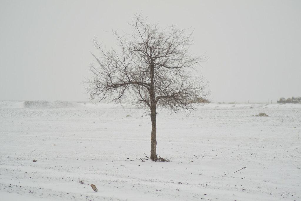 дерево аэродромное