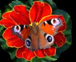 бабоч-Крылья-ангела-(218).png