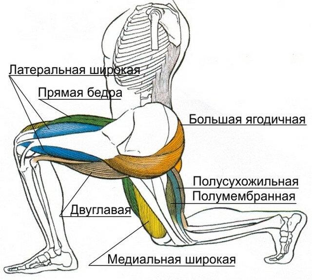 Работа мышц и суставов техника выполнения скакательный сустав у чихухуа