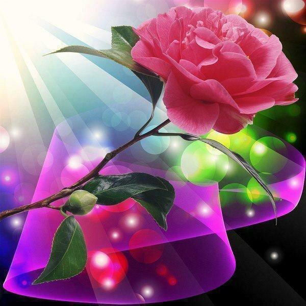 цветы 520.jpg