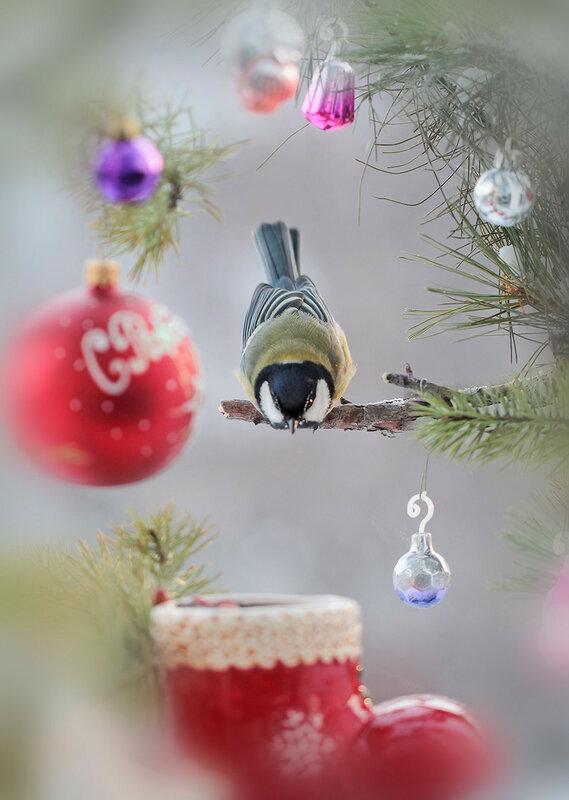Да тут подарки!
