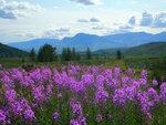 Фото про заполярную жару, Райские Горы и Иван-Чай