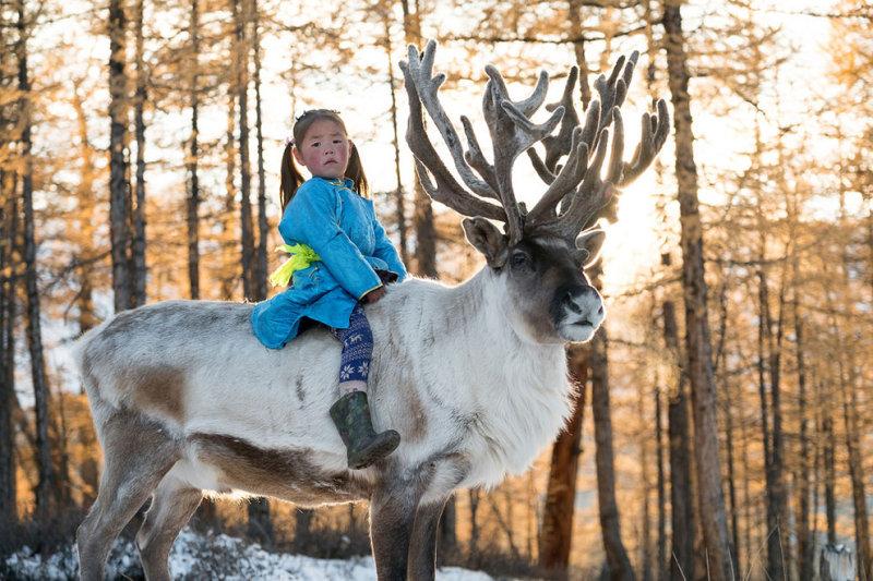 Маленькая Укра уже может ездить на олене, который принадлежит ее семье.