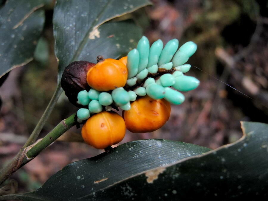 Странные плоды