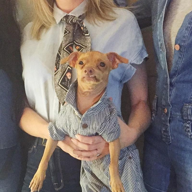 Уродливая собака сделала свою хозяйку богатой