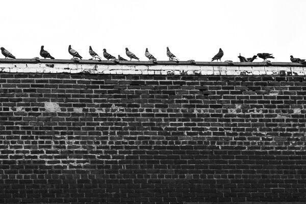Минимализм: голуби на крыше