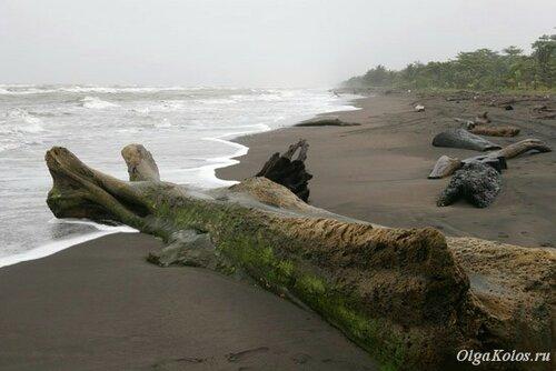 Пляж и штормящее море в Тортугеро