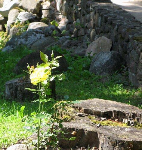 Цветы и камни Эдоле