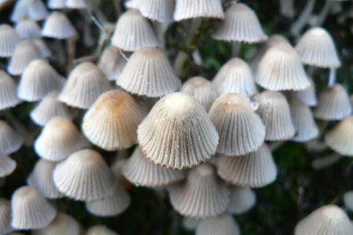 грибы много мелких