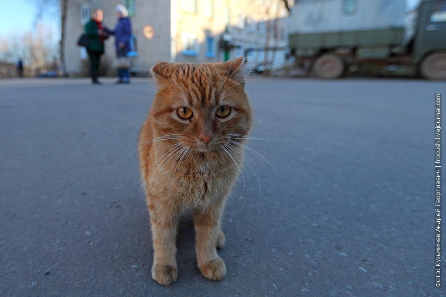 рыжий кот в Котельниче