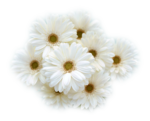 JC_Flowers for home.png