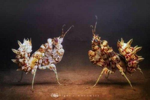 Удивительные и необычные насекомые, животные,рыбы,птицы и т.д