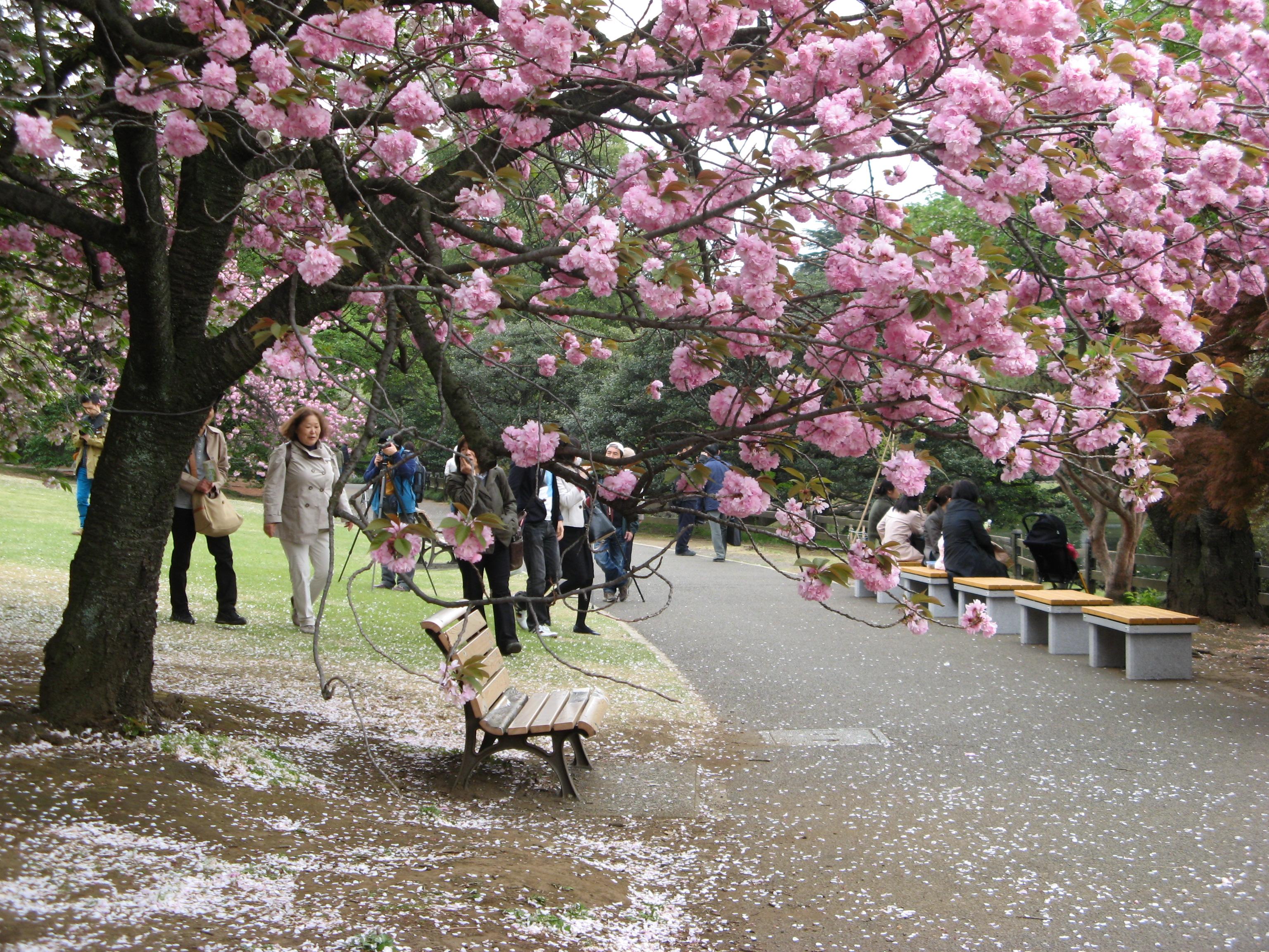 Синдзюку-Гёэн (Императорский сад Синдзюку).Япония