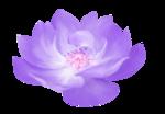 Lavender Paradise (70).png