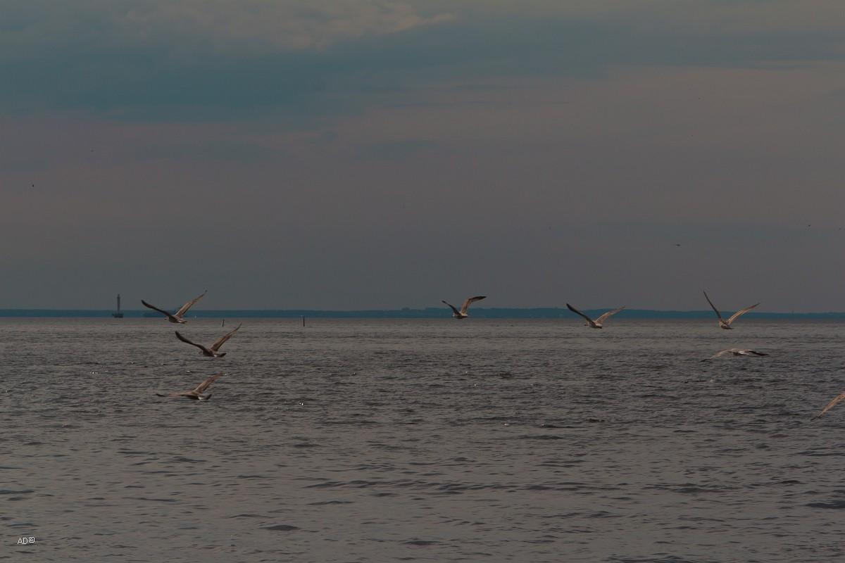 Забытые острова - Финский залив