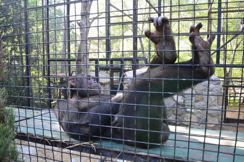 обезьяны в зоопарке Сказка, Ялта