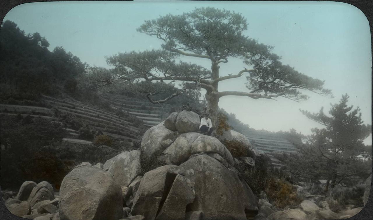 Человек под деревом