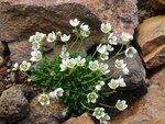 Цветы на камнях..JPG