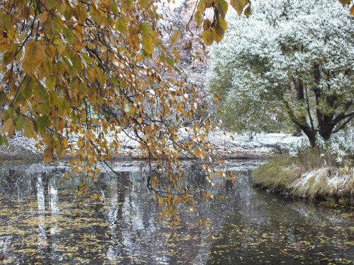 Первый снежный покров в дендрологическом парке Екатеринбурга. Автор фотографии - Наталия Викулова